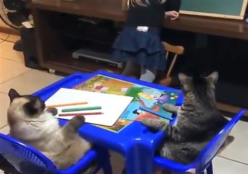 Katzen beim Unterrricht