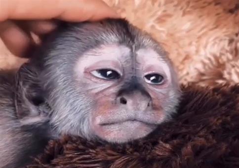 Den Affen kraulen