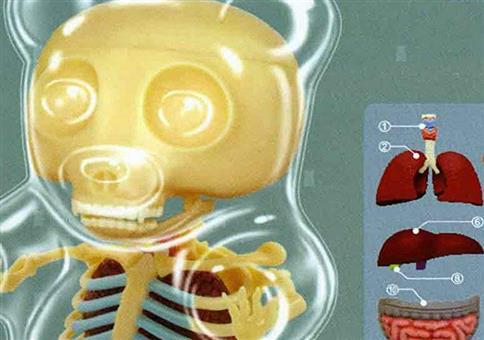 Die Anatomie eines Gummibärchens