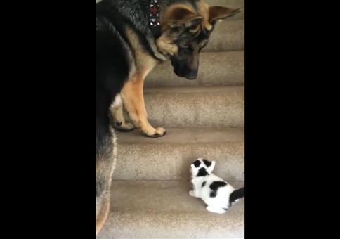 Großer Hund und kleine Katze auf der Treppe