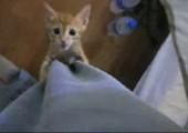 Hungrige kleine Katze