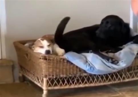 Im Hundekorb vom Schwanz geschlagen