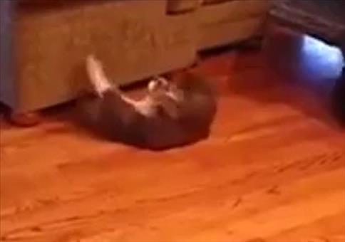 Katze macht Situps