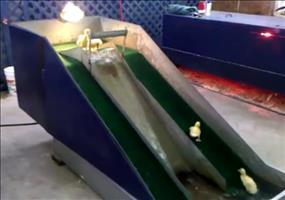 Wasserrutsche für kleine Enten