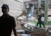 Ninja Affe im Zoo dreht durch