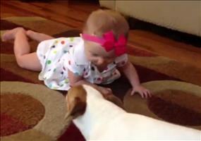 Hund zeigt Baby wie man krabbelt