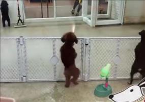 Hund freut sich wenn das Herrchen nach Hause kommt