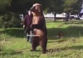 Sehr talentierter russischer Bär