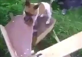 Der Hund eines Ingenieurs