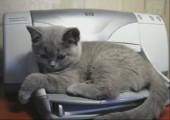Drucker erschreckt Katze