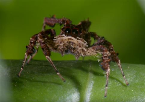 Spinne mit drei Superkräften