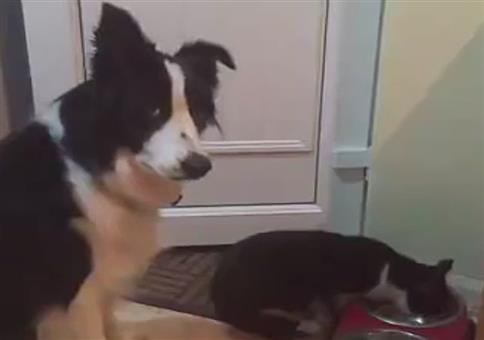 Hund und Katze am Fressnapf: Wer ist hier der Boss?