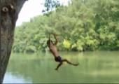 Die Anfänge von Tarzan