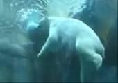 Eisbären müssen auch groß