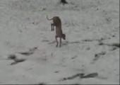 Dieser Hund mag keinen Schnee