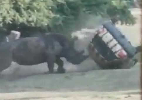 Nashorn vs. Auto im Safaripark