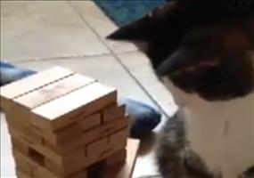 Gegen eine Katze Jenga spielen