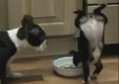 Hund geht beim essen hoch