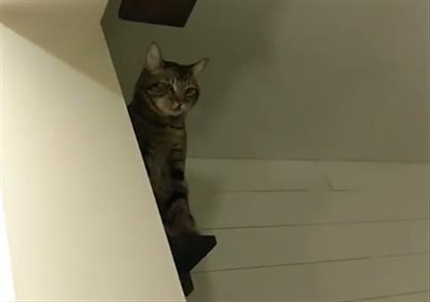 Da oben sitzt ne kotzende Katze