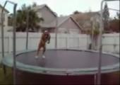 Hund auf nem Trampolin