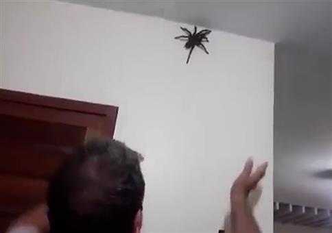 Kleine Spinne einfangen