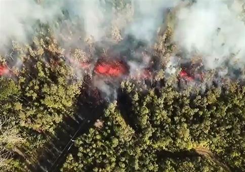 Lavastrom frisst sich durch den Wald auf Hawaii