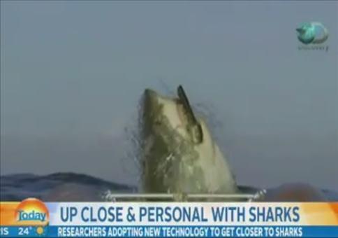 Haivideo beeindruckt Nachrichtensprecher