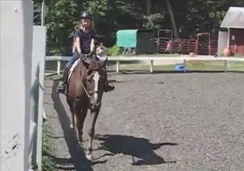 Dicker Pferdefurz in der Reitschule