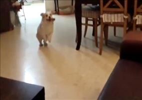 Hund vollzieht majestätischen Sprung auf die Couch