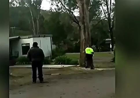 Wenn ein Möchtegern Profi einen Baum fällt