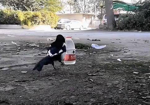 Schlaue durstige Elster