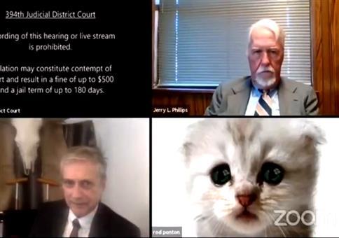 Katzenfilter bei Videokonferenz