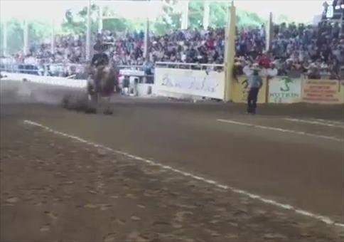 Vollbremsung mit Pferd