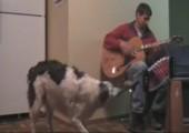 Hund spielt Akkordeon