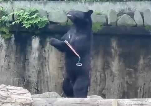 Bruce Lee wurde als Bär wiedergeboren