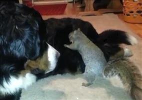 Eichhörnchen hat ein super Versteck für seine Nüsse gefunden