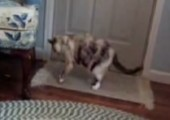 Katze vs Xylophone
