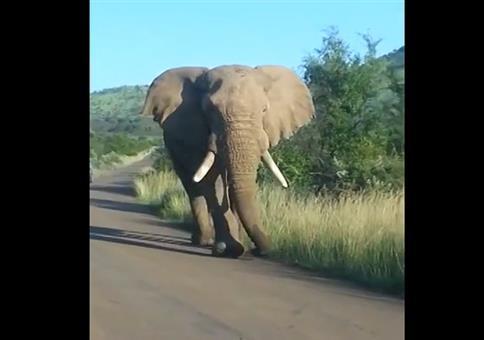 Elefant kuschelt mit Auto