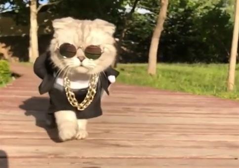 Diese Katze ist der Boss!