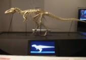 Laufendes Dinosaurierskelett