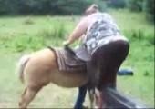 Dicke Frau vs. Pferd