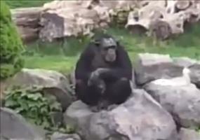 Rechter Affe im Zoo