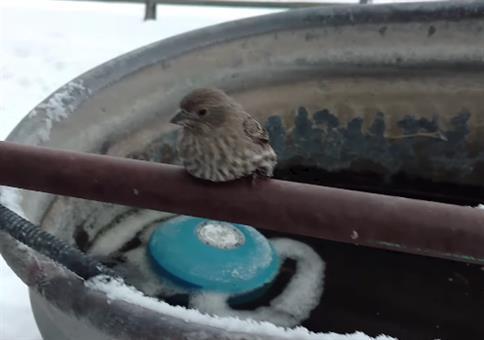 Vogel ist an Stange festgefroren