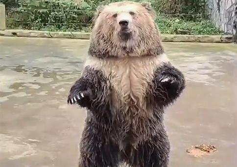 Bären füttern: Hey! Hier drüben!