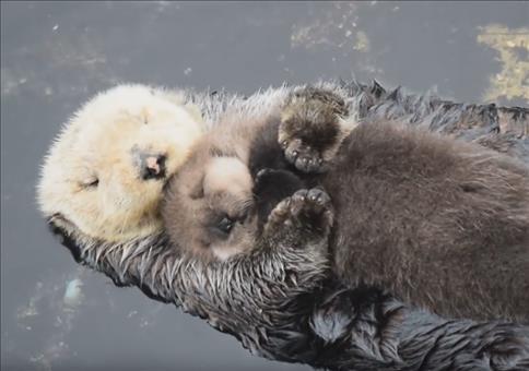 Ottenbaby bei Mama aufm Bauch