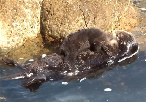 Kuschel Otten