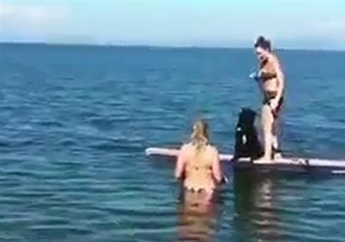 Hund auf Surfbrett - Hol das Stöckchen