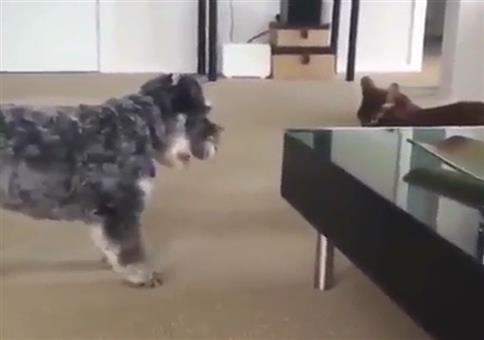 Katze mit Killerblick