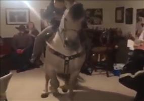 House Horse Party