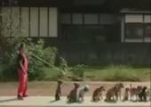 Wenn 13 Hunde gleichzeitig Seilspringen